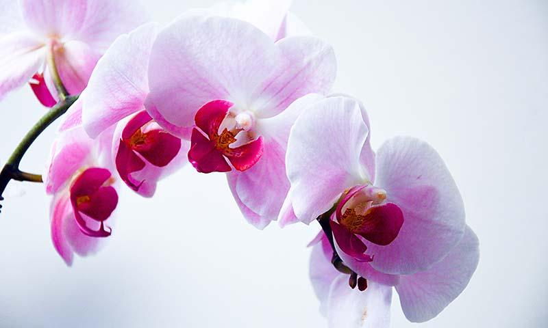 Japanese flowers.
