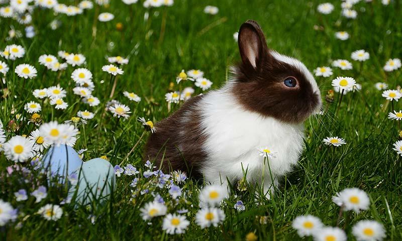 Bunny rabit.